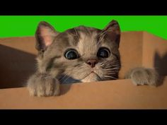 Little Kitten My Favorite Cat Play Fun Pet Care Game for Toddlers and Children Birthday Songs Video, Cat Brain, Cat Body, Heart Coloring Pages, Tidy Cats, Little Kittens, Kids Songs, Cool Pets, Animal Rescue Shelters