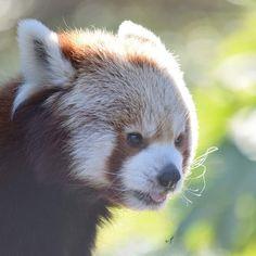 Brown Bear, Ferret, Yoga, Animals, Beautiful, Instagram, Rabbits, Dog, Cute Animals