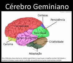 Como seriam divididas as funções do cérebro de acordo com seu signo?