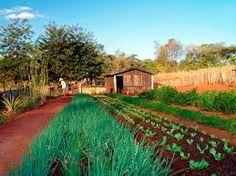 hortas biologicas em portugal - Pesquisa Google