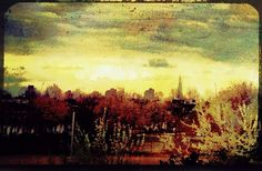 The Shard Beyond The Park by Nic Laight, via Flickr