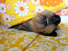 At home: Armi sleeping.