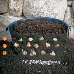 Sandwich Bulbs for Six Weeks of Blooms. - Choose bulb varieties that flower a few weeks apart, such as crocus, tulips, and daffodils, which will bloom in rotation. Outdoor Projects, Garden Projects, Garden Ideas, Container Gardening, Gardening Tips, Container Plants, Planting Flowers, Planting Bulbs, Fall Planting