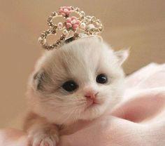 Pageant Kitten @Victoria Valentine