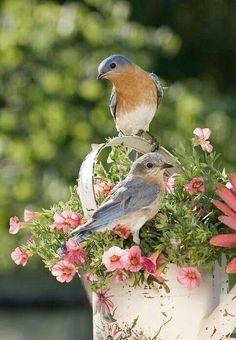 PRETTYYY#Birds #nature #beautiful