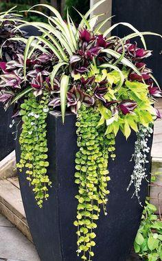 Container Flowers, Container Plants, Container Gardening, Outdoor Flowers, Outdoor Plants, Balcony Flowers, Plantas Bonsai, Pot Jardin, Flower Landscape