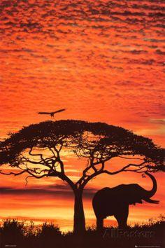 Coucher de soleil africain Photographie sur AllPosters.fr