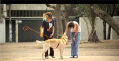 """""""Adòptame!"""", il messaggio dei cani coi padroni invisibili #mediagu #creatividigitali #unconventional"""