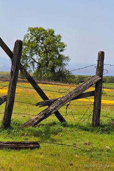 Spring in Northern California by Barbara Brown Old Fences, Rain Clouds, Table Mountain, Broken Leg, Small Farm, Northern California, Farmer, Fields, Abandoned