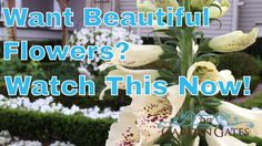 Love Flowering Hanging Baskets? Watch This Before You Buy Another Flower! #gardening #garden #DIY #home #flowers #roses #nature #landscaping #horticulture
