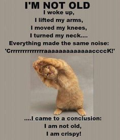 not old cat funny