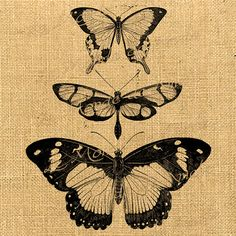 Butterfly images Digital sheet Wings Fly animal Insect Vintage biology For graphic art transfer gift tag label napkins burlap pillow n228