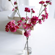 Flowering quince branches (easy to force for spring color) Bring inside just when the buds begin to open. Try others cherry blossoms etc