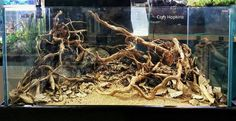 by Cory Hopkins Aquascaping can be an aspect of the aquarium hobby that many find hard to get into.  Once a hobbyist starts making their own displays and begins to understand the basics of designing an aquascape it gets much easier.  It's not difficult but it can sometimes be hard to figure out where to …