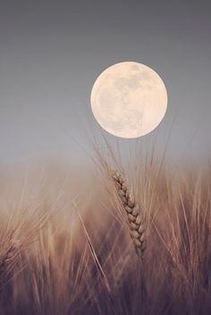 harvest moon - the full moon closest to the autumnal equinox. Beautiful Moon, Beautiful Places, Beautiful Scenery, Shoot The Moon, Super Moon, Harvest Moon, Jolie Photo, Night Skies, Pretty Pictures