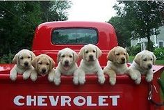 full load of puppies
