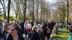 The Keukenhof brakes record after record. In 2014 about 850.000 people visited the anual exibition. In 2015 special attention is given to the colors Vincent van Gogh used in the paintings.