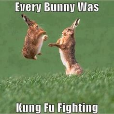 Every bunny was Kung fu fighting, there kicks as fast as lightning