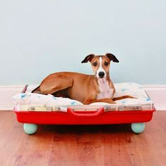 Red Suitcase DIY Bed for Pets