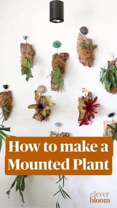 Plant Crafts, Plant Projects, Succulent Gardening, Planting Succulents, Container Gardening, House Plants Decor, Plant Decor, Hanging Plants, Indoor Plants