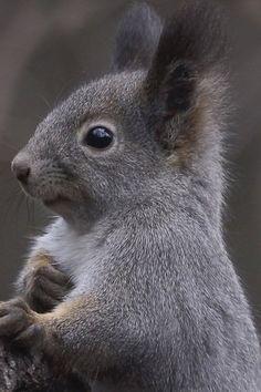 animals, squirrels