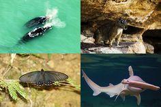 Estaudo analisou estado de conservação de 12.254 espécies (Fotos/Arte: MMA)