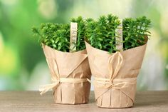 herb plants in pots with beautiful paper decor