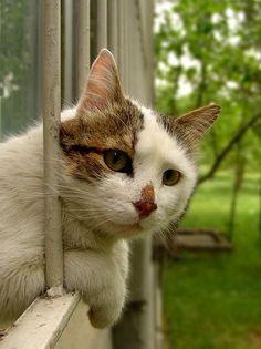 Assistindo da janela.....