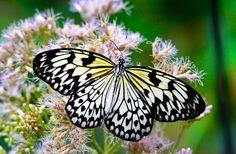 Paper kite butterfly by WildoCagliani74. @go4fotos