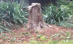 Tree trunk & mushrooms