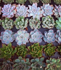 Succulents, Plants, Succulent Plants, Plant, Planting, Planets