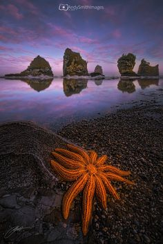 ~~Astral | starfish sunset seascape, west coast, New Zealand | by Andy Smith~~