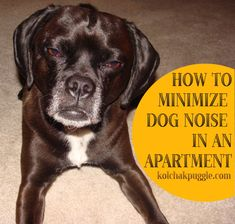 How to Minimize Dog Noise in an Apartment