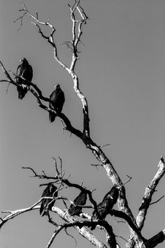 Photograph 2014 August Turkey Vultures Waiting on Dinner No 2-1 by Ricky Grisolano on 500px