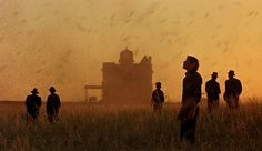 """Locusts rise up from the wheat fields in Terrence Malick's """"Days of Heaven"""" (1978). Nestor Almendros won the Academy Award for Best Cinematography."""