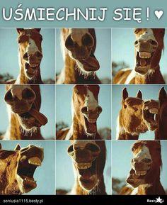 Horse, koniki we love