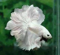 Flor o pez? #animals #peces