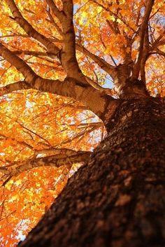 13 Best Jesen Na Zlatiboru Images Nature Landscape