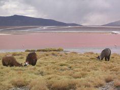 Laguna Colorada. | 25 Fotos de Bolivia que parecen sacadas del cerebro de Dalí