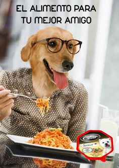 el amuncio representa un perro que es el mejor amigo del hombre vestido de persona y por eso pone en el anuncio el alimento para tu mejor amigo