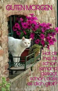 (notitle) The post Untitled appeared first on Mein Modell. (notitle) The post Untitled appeared first on Mein Modell. Christian Dating Advice, Evening Quotes, Good Morning Sunshine, Morning Blessings, Garden Quotes, Motivational Videos, Morning Motivation, Cat Drawing, Bible Scriptures