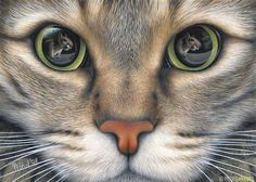 """""""Facing the Enemy"""" - Peter Hohnsl, color pencil, 2013 {feline cat eyes realism drawing #loveart}"""