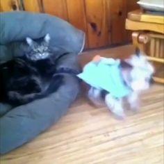 Cats R jerks 🐱