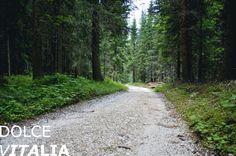 Walking up to Latemar through deep alpine forest in italian Alps.