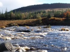 Otter Pools, Raider's Road, Galloway Forest Park, Dumfries and Galloway #naturalscotland