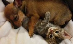 How Two Abandoned Baby Animals Created an Unlikely Bond That Will Last Their Entire Lives