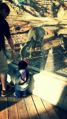 OKC Zoo OKC Celebrities Pinterest