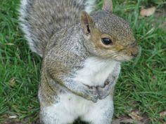 squirrel :)