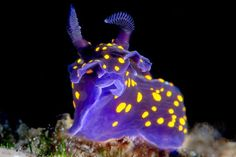 Nudibranch By: Alejandro Topete