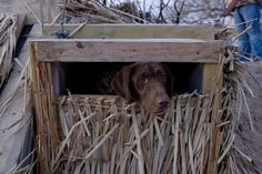 Here are some important features to consider when picking out your blind for waterfowl season. Waterfowl Hunting, Duck Hunting, Hunting Dogs, Layout Blinds, Boat Blinds, Duck Blind, Hunting Blinds, Game Birds, Fishing